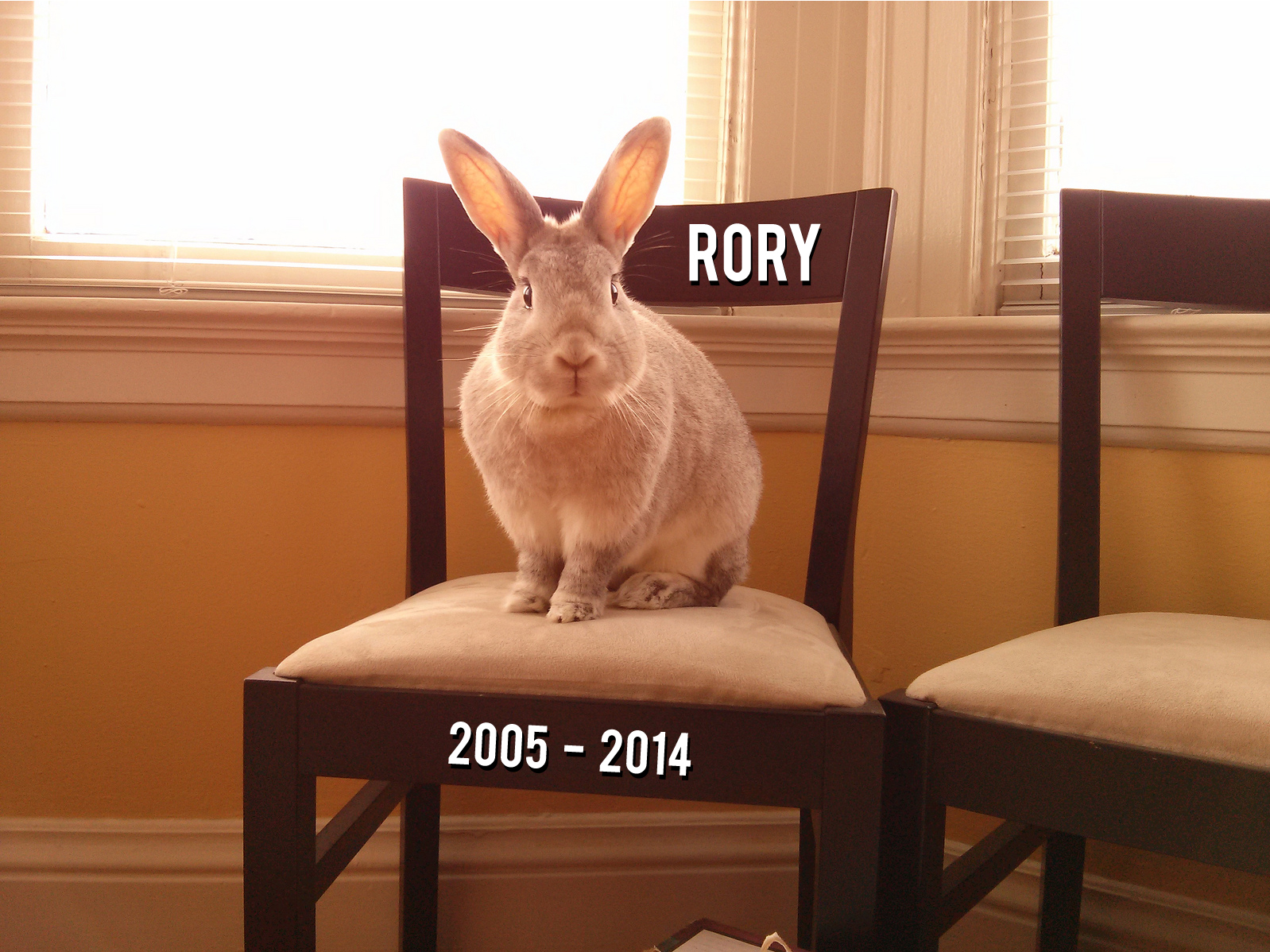 Rory RIP